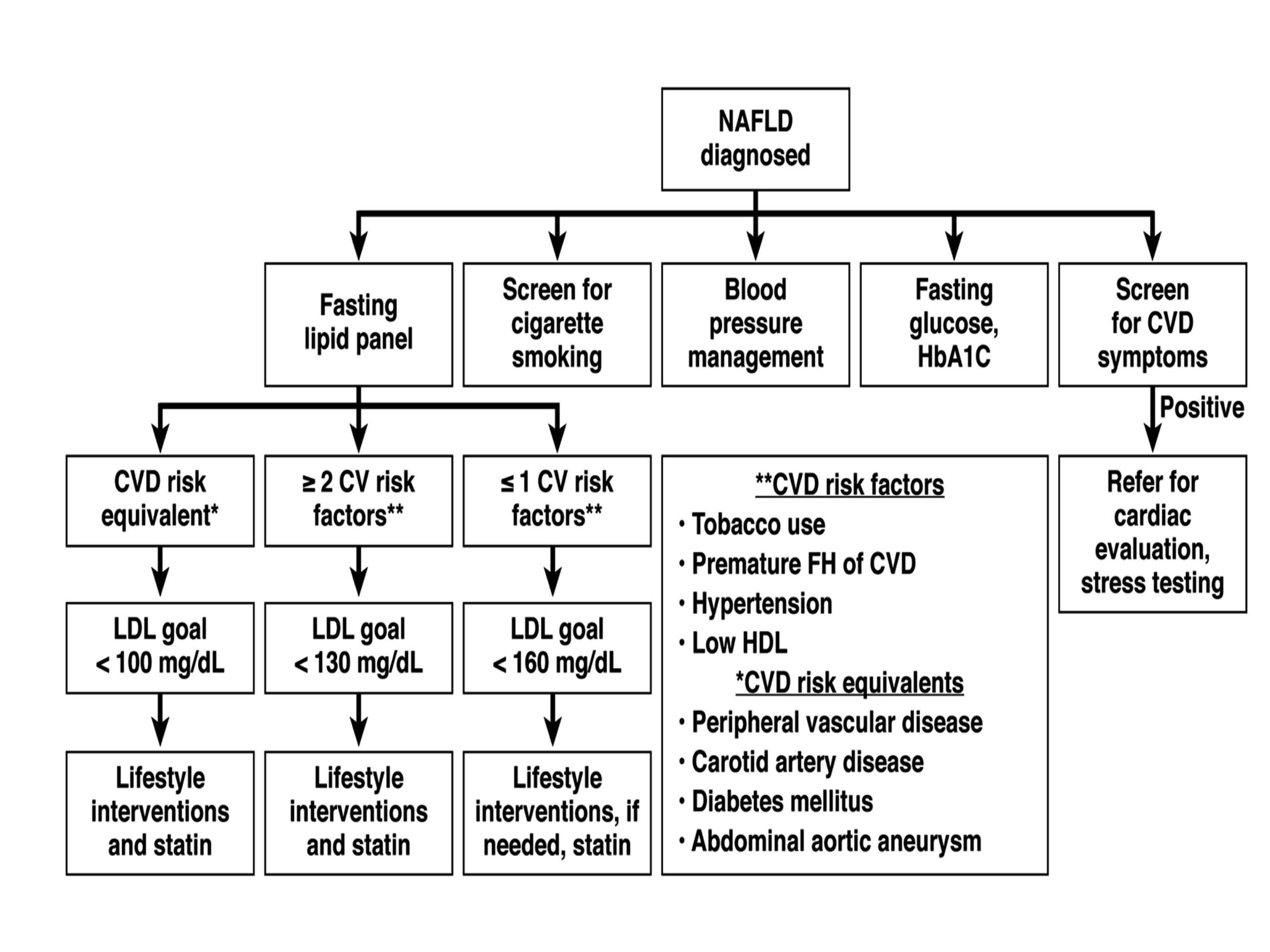Hígado graso y riesgo cardiovascular – MÉDICO ESPECIALISTA